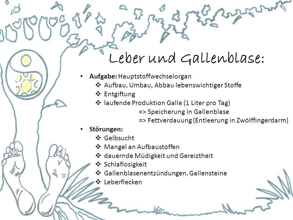 Leber und Gallenblase:
