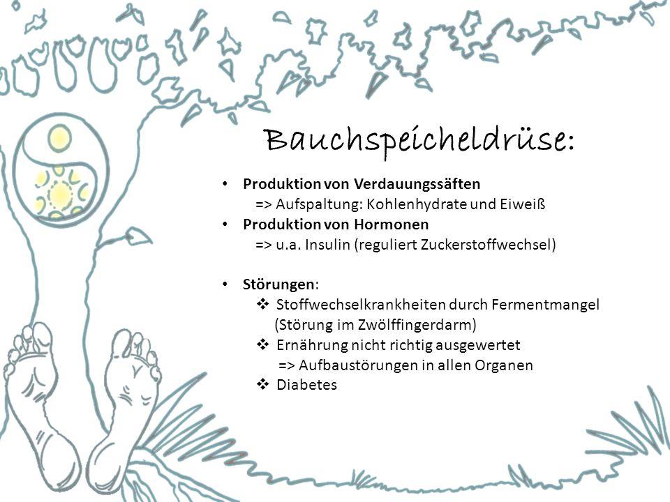 Bauchspeicheldrüse: Produktion von Verdauungssäften