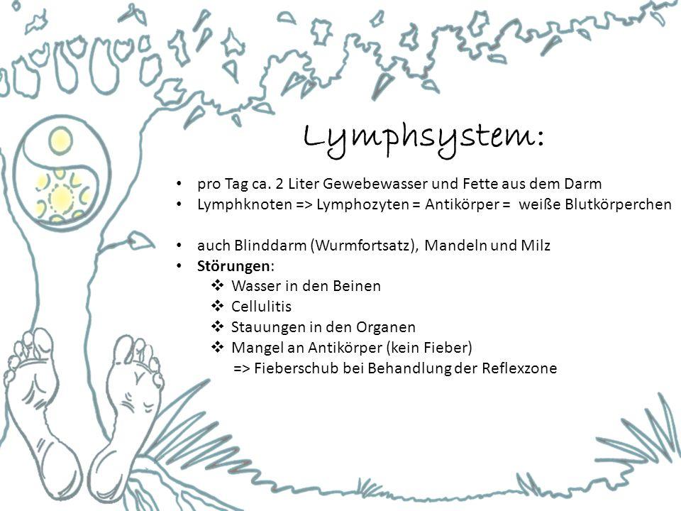 Lymphsystem: pro Tag ca. 2 Liter Gewebewasser und Fette aus dem Darm