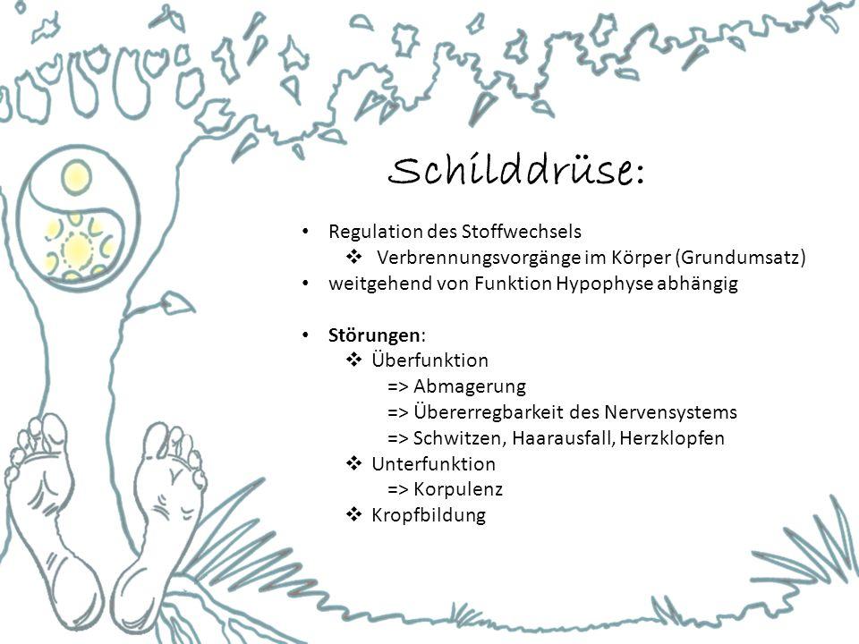 Schilddrüse: Regulation des Stoffwechsels
