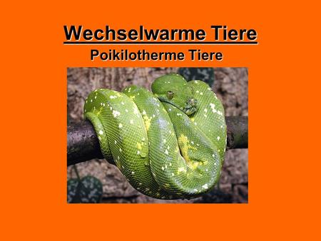 Wechselwarme Tiere Poikilotherme Tiere.