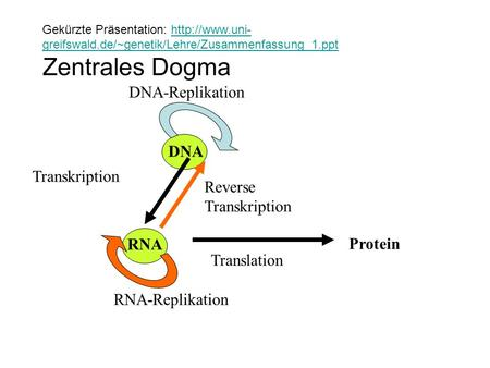 Zentrales Dogma DNA-Replikation DNA Transkription Reverse