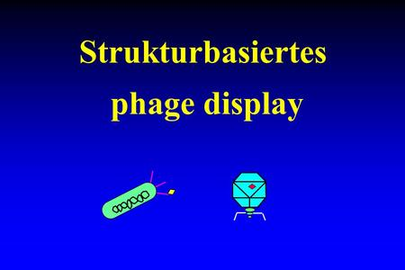 Strukturbasiertes phage display.