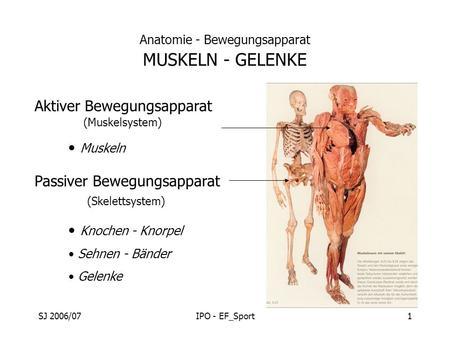 VII. Anatomie – Passive Strukturen des Rückens - ppt herunterladen