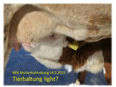 NEK Mutterkuhhaltung Tierhaltung light?