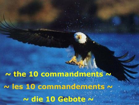 ~ the 10 commandments ~ ~ les 10 commandements ~ ~ die 10 Gebote ~