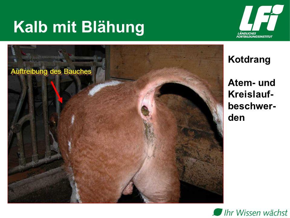 Kälberkrankheiten am Milchviehbetrieb - ppt video online herunterladen
