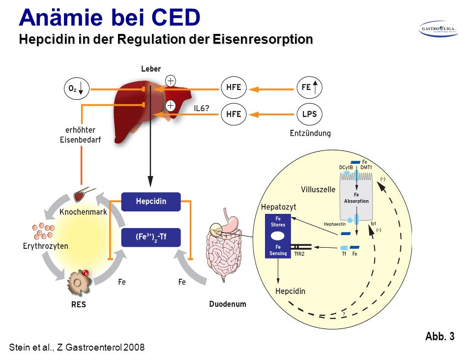 Anämie bei CED Hepcidin in der Regulation der Eisenresorption Abb. 3