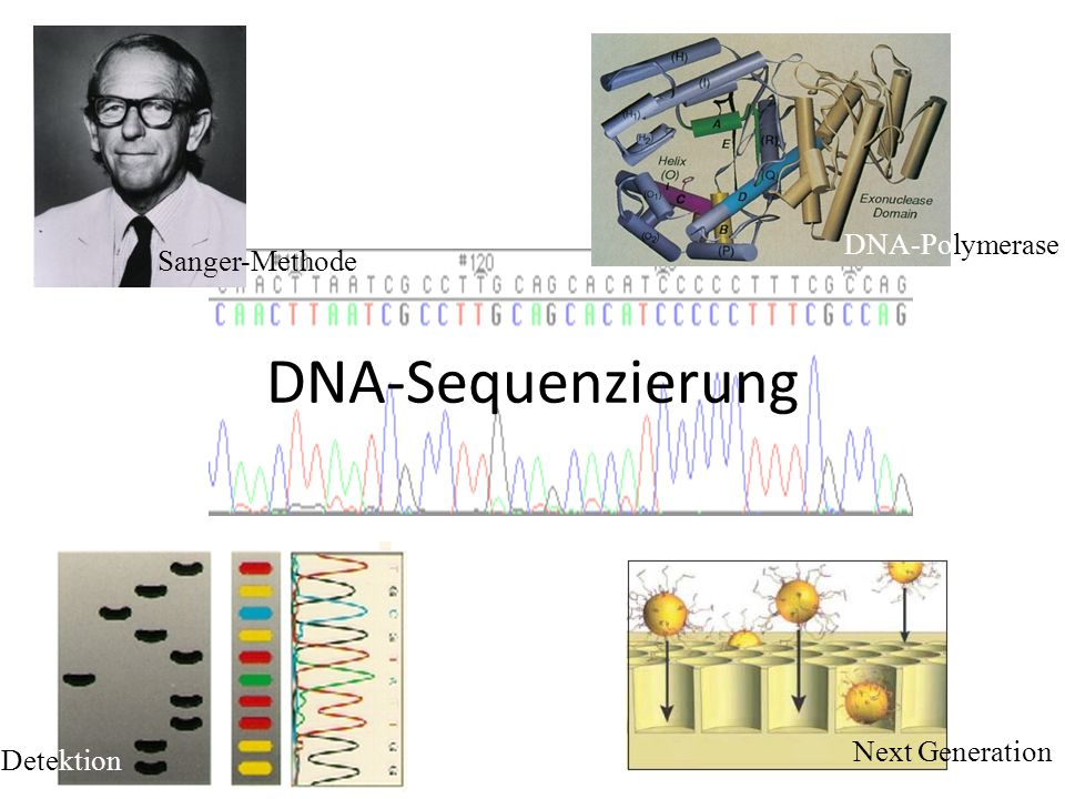 DNA-Sequenzierung DNA-Polymerase Sanger-Methode Next Generation