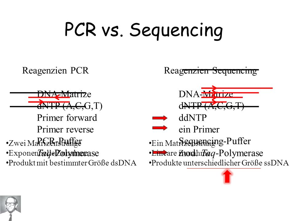 PCR vs. Sequencing Reagenzien PCR DNA-Matrize dNTP (A,C,G,T)