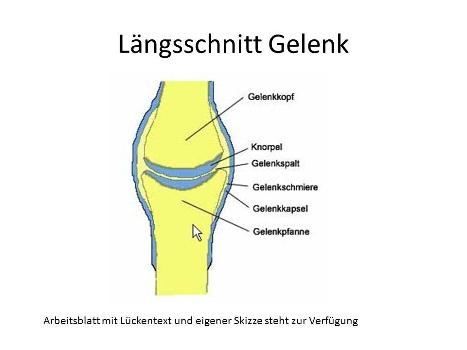 Sektion Kniegelenk. - ppt video online herunterladen