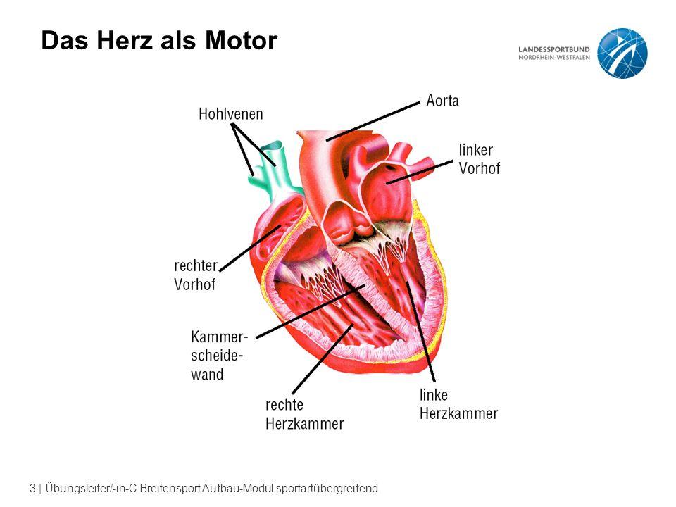 Ungewöhnlich Das Herzsystem Fotos - Anatomie Von Menschlichen ...