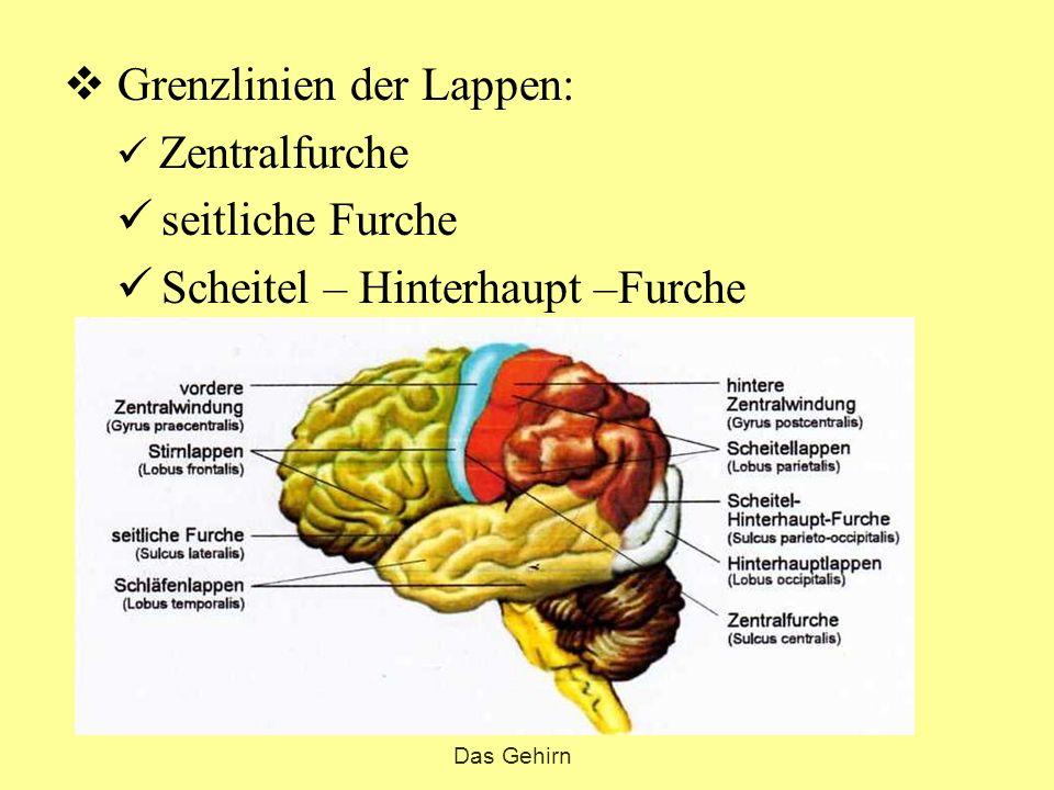 Das Gehirn. - ppt video online herunterladen