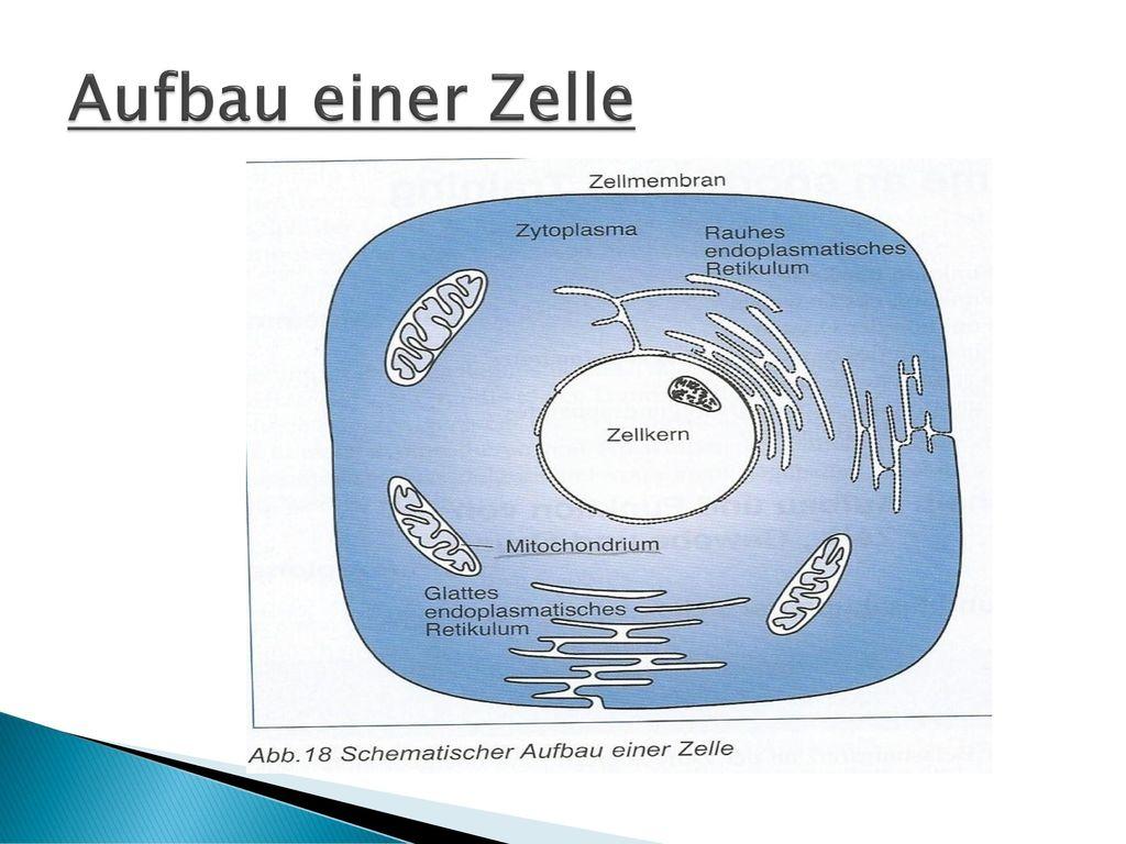 Bestandteile einer zelle
