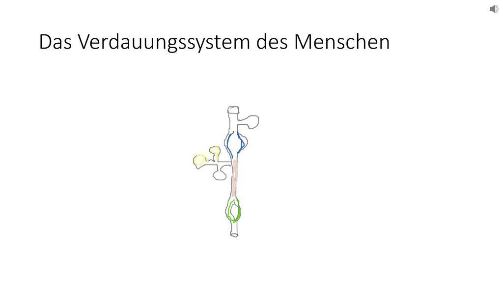 Groß Das Verdauungssystem Arbeitsblatt Fotos - Arbeitsblätter für ...