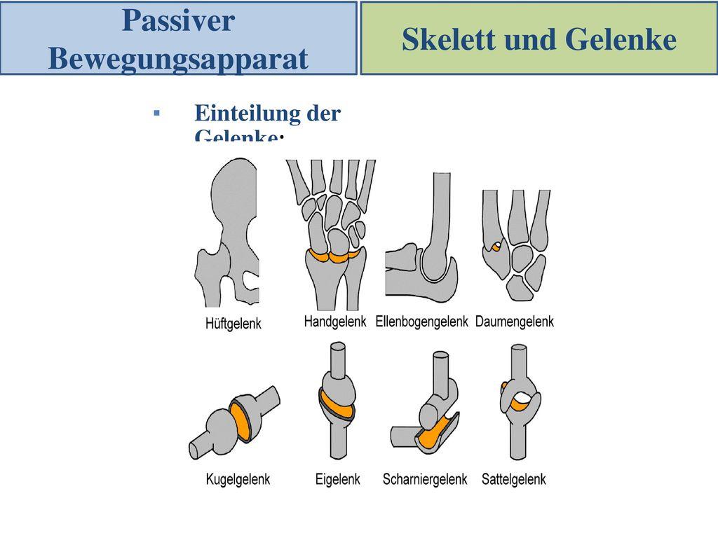 Fantastisch Sattelgelenk Bilder - Anatomie Ideen - finotti.info