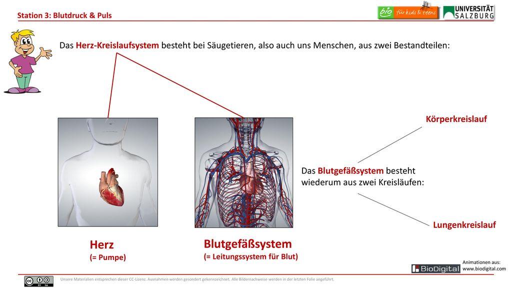 Rhythmus des Lebens Blutdruck und Puls präsentiert von Alex. - ppt ...