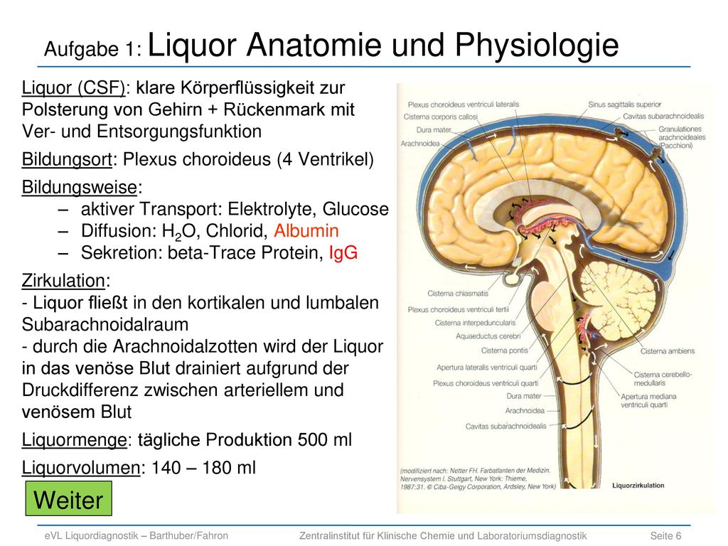 Großartig Anatomie Und Physiologie Des Gehirns Und Des Rückenmarks ...