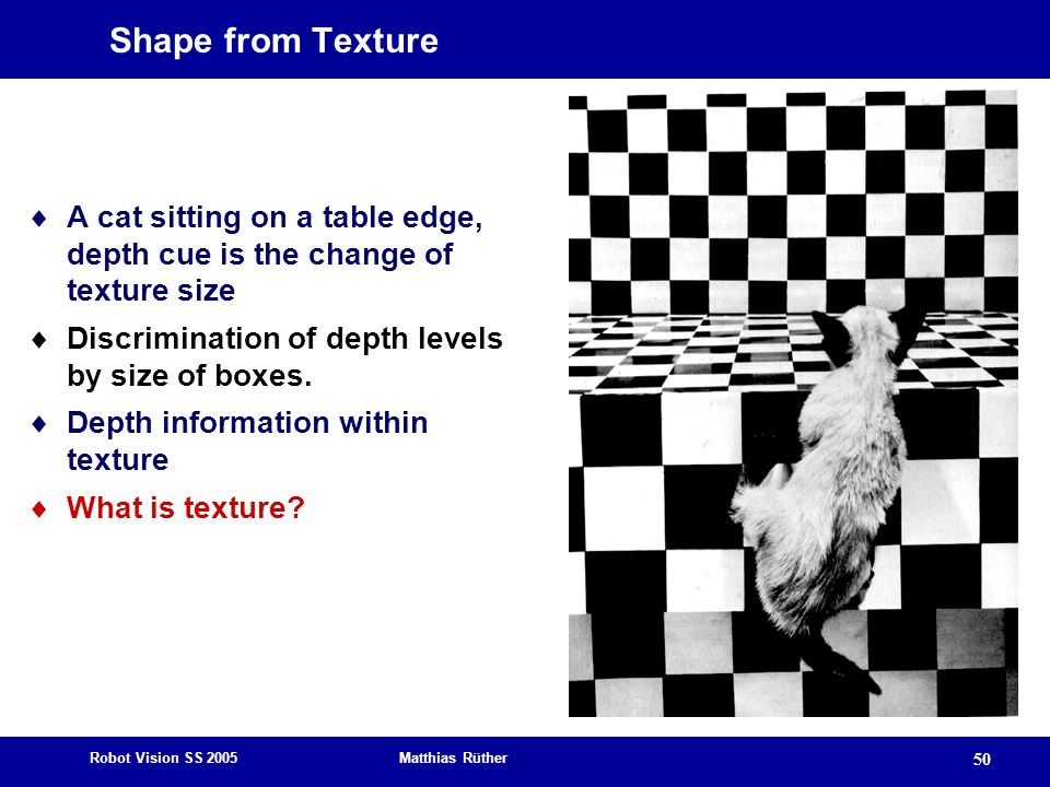 Shape from Texture A cat sitting on a table edge, depth cue is the change of texture size. Discrimination of depth levels by size of boxes.