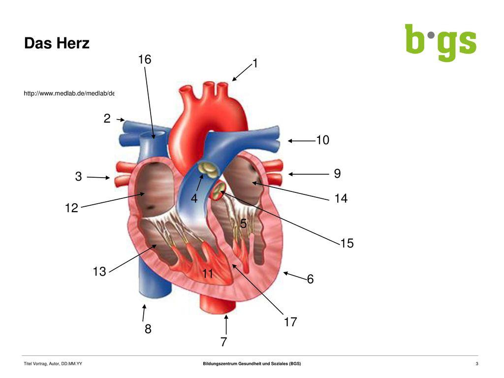 Anatomie Physiologie Herz   ppt herunterladen
