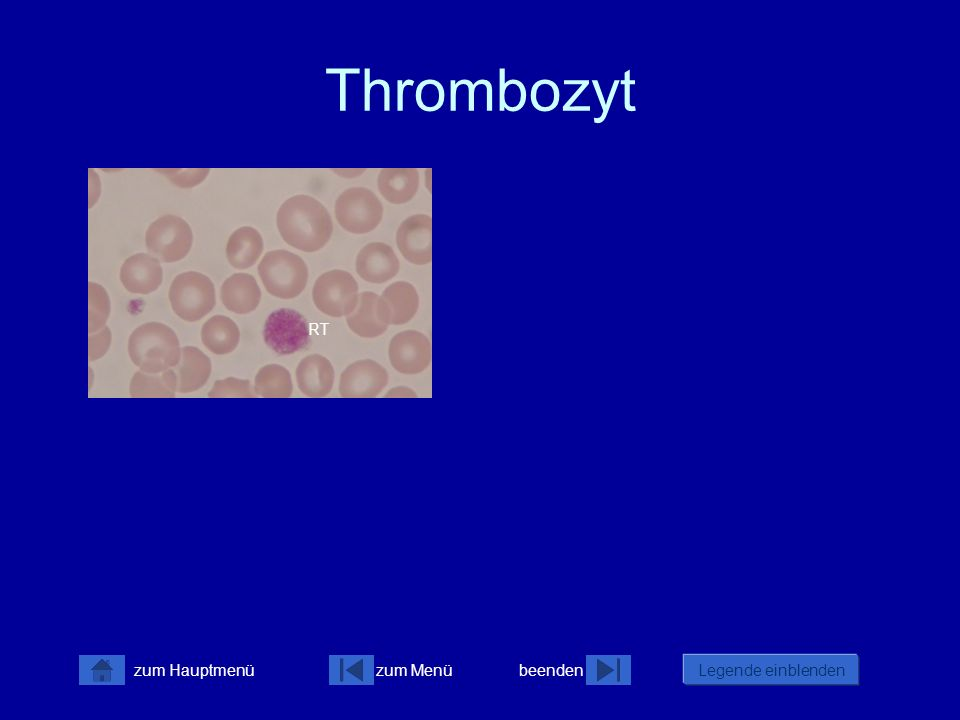 Thrombozyt RT