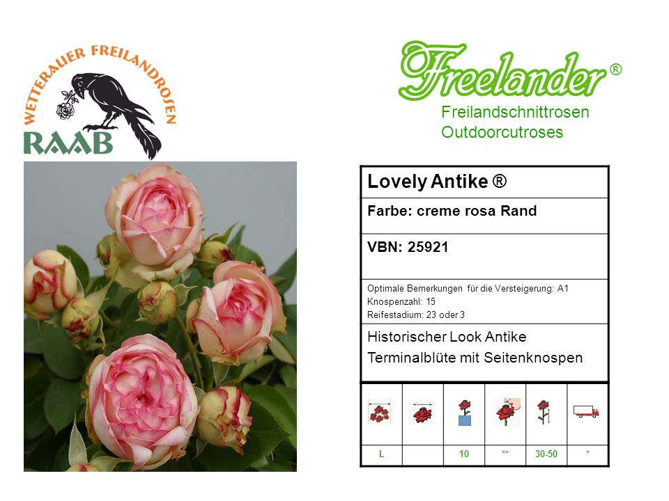 Lovely Antike ® ® Freilandschnittrosen Outdoorcutroses