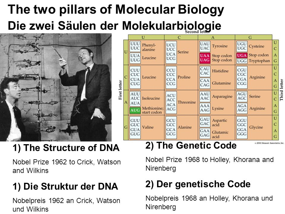 The two pillars of Molecular Biology