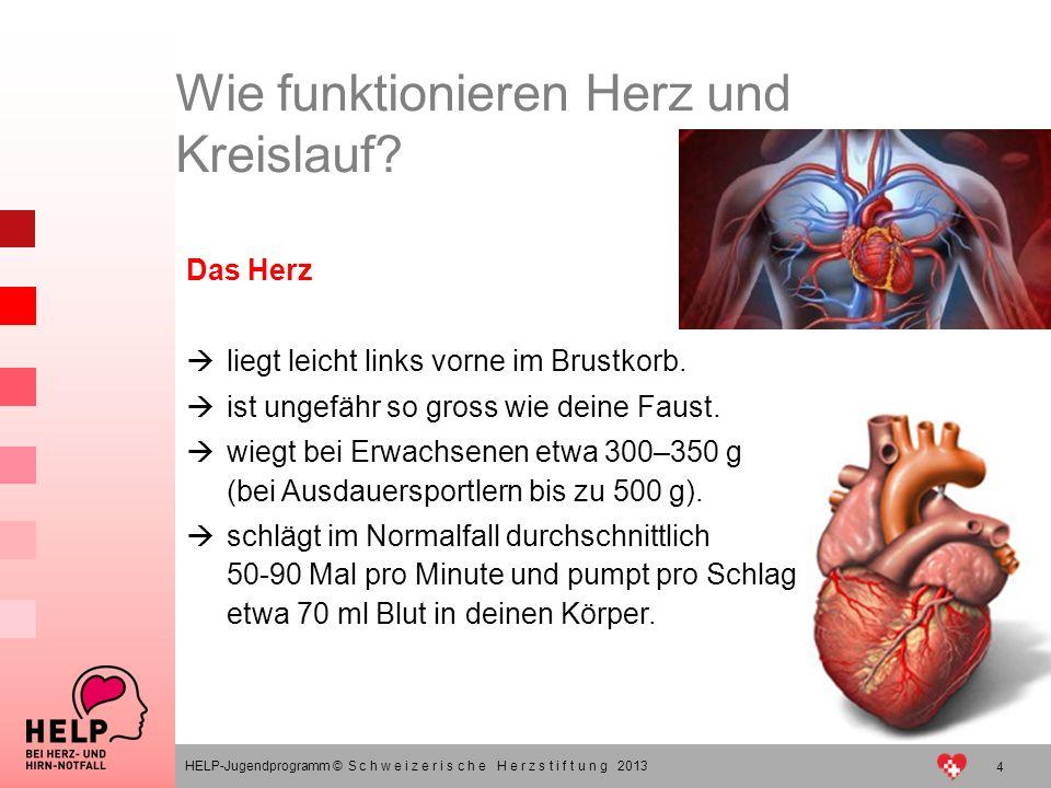 Das Herz verstehen – im Notfall richtig handeln HELP-Jugendprogramm ...