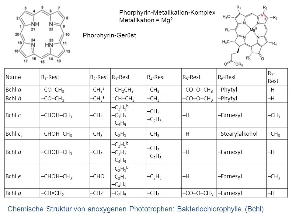 Phorphyrin-Metallkation-Komplex
