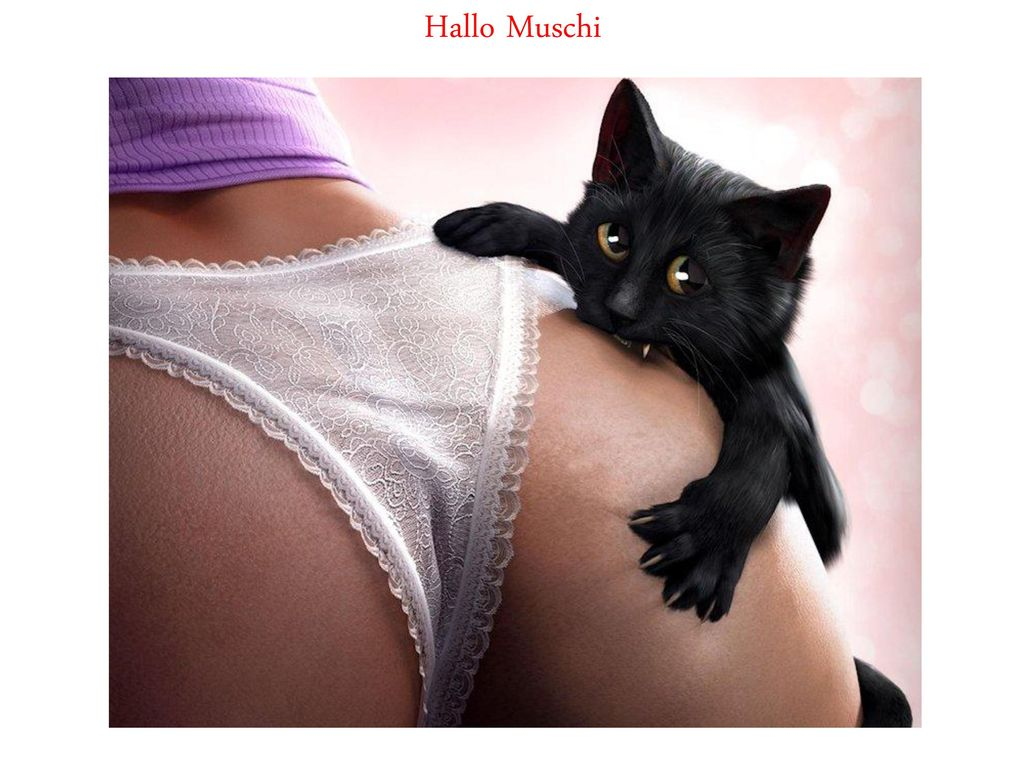 hallo muschi