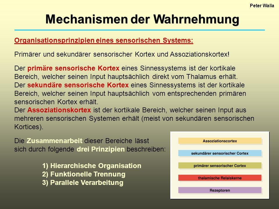 Biologische Psychologie I - ppt video online herunterladen