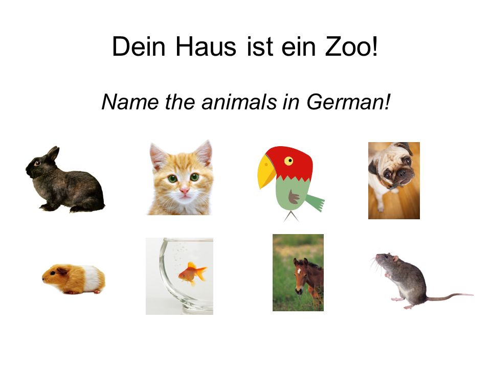 Name the animals in German!