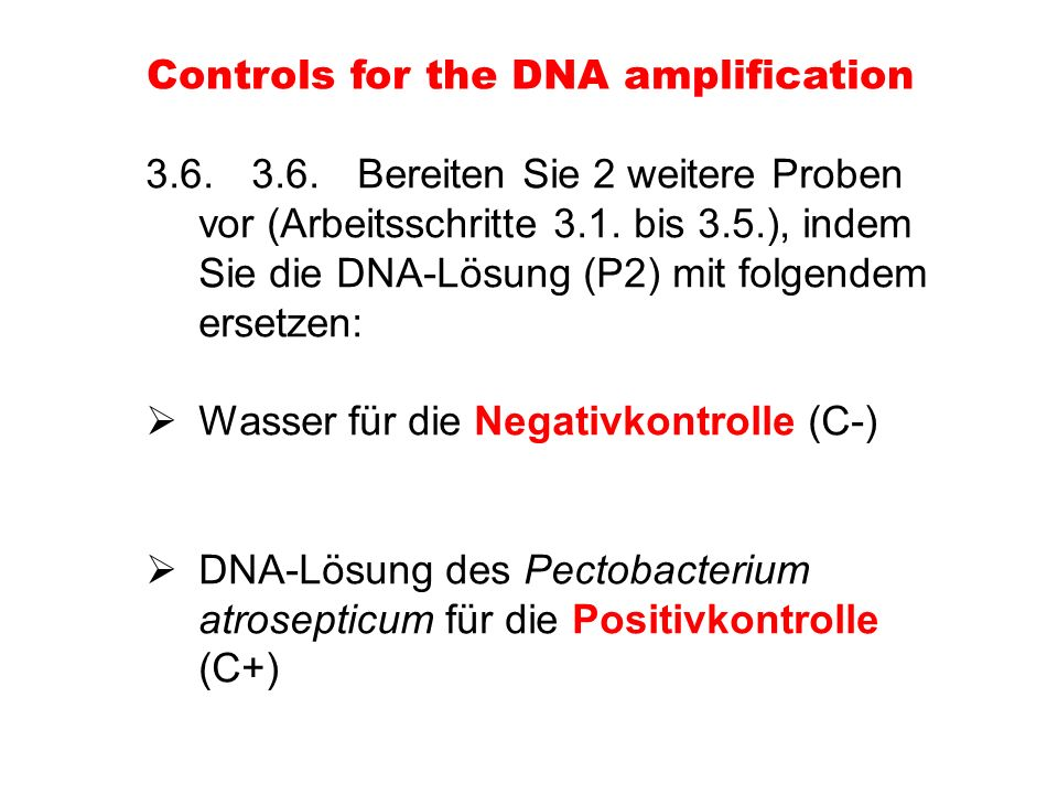 Controls for the DNA amplification