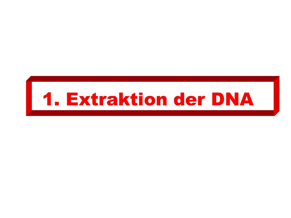 1. Extraktion der DNA