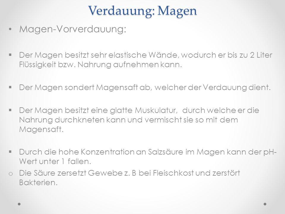 Erfreut Verdauungssystem Flussdiagramm Arbeitsblatt Galerie - Mathe ...