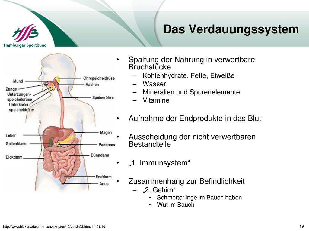 Aufbau und Funktion wichtiger Körpersysteme und ihr Bezug zum ...