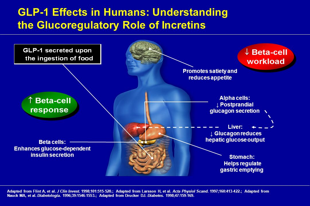 GLP-1 Effects in Humans: Understanding the Glucoregulatory Role of Incretins