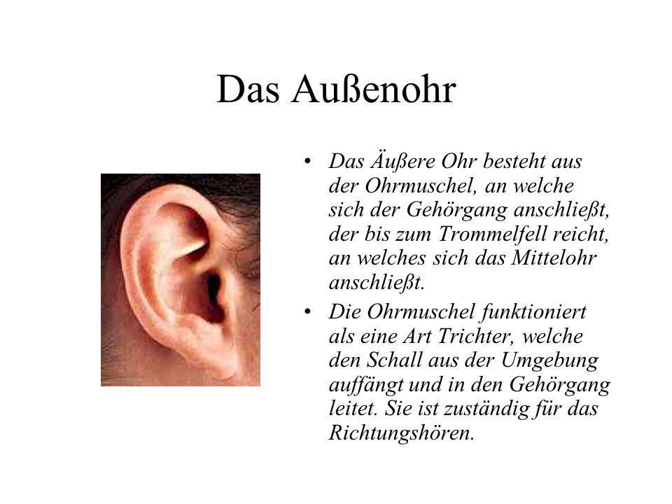 Das Ohr Außenohr Mittelohr Innenohr. - ppt video online herunterladen