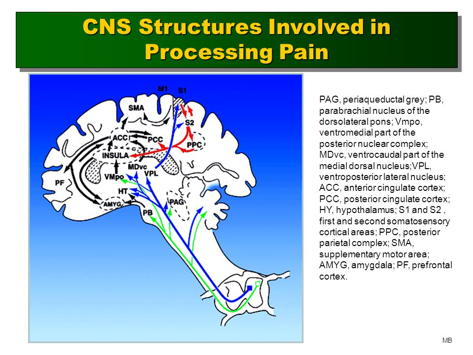 CNS Structures Involved in Processing Pain