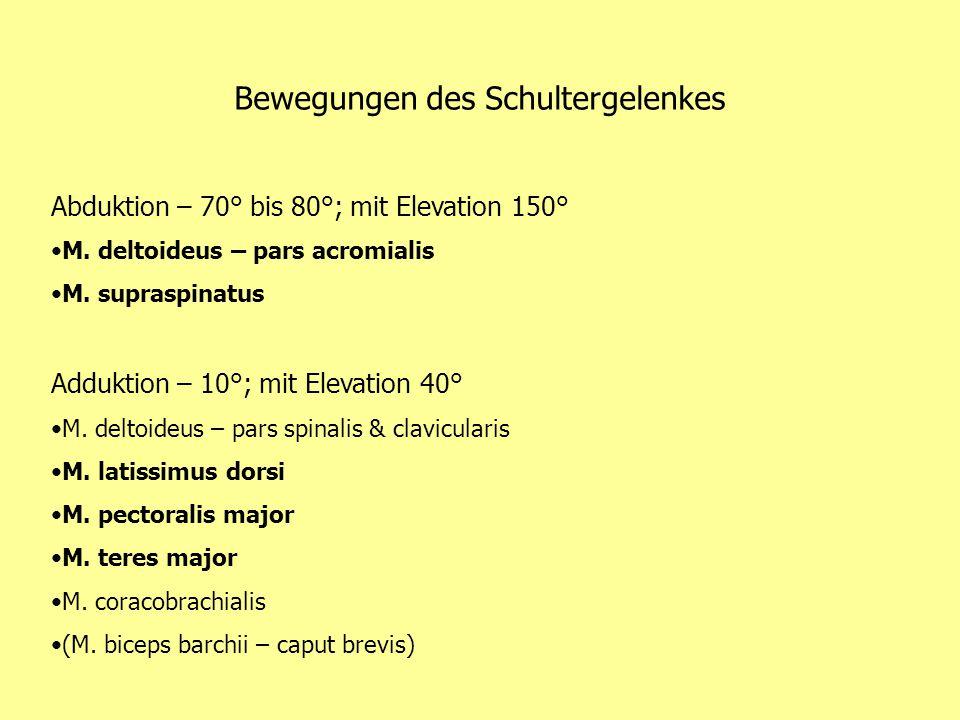 Tutorat Anatomie Studienjahr von Harriet & Danilo Immer montags ...