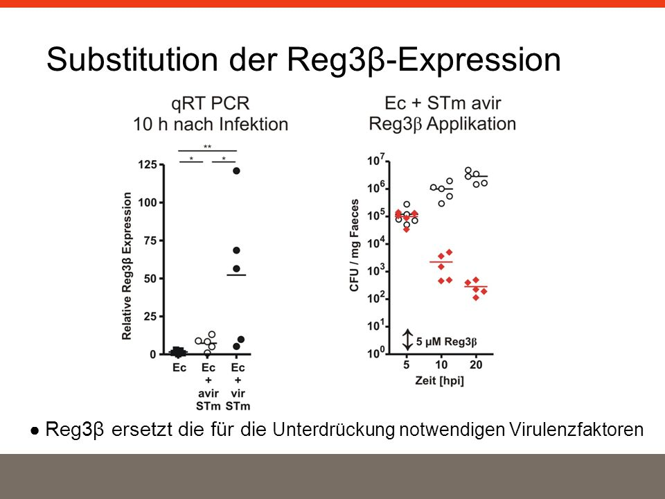 Substitution der Reg3β-Expression