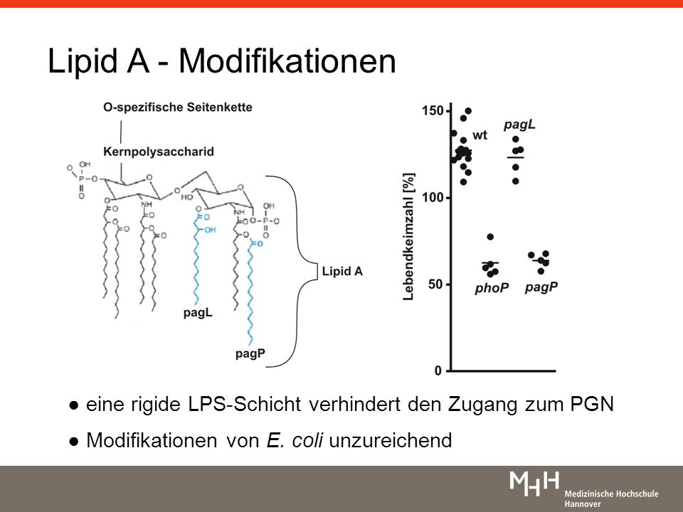 Lipid A - Modifikationen