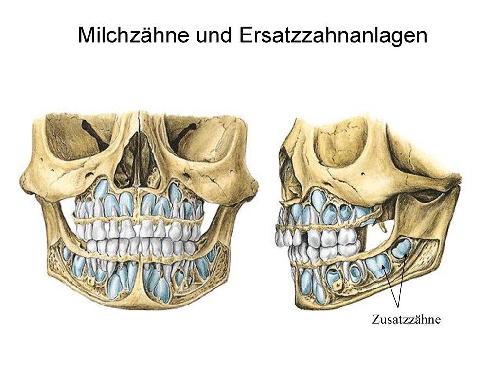 Zähne, Speicheldrüsen (Anatomie, Histologie) Zahnentwicklung - ppt ...
