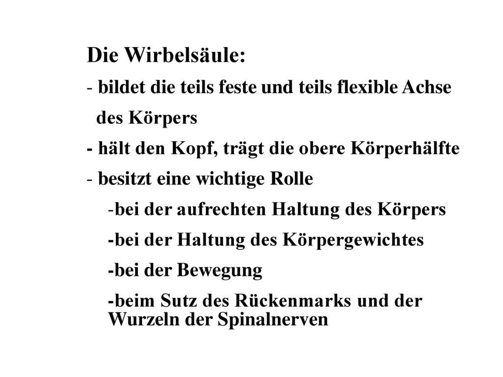 KLINISCHE ANATOMIE DER WIRBELSÄULE UND DES BRUSTKORBES - ppt ...