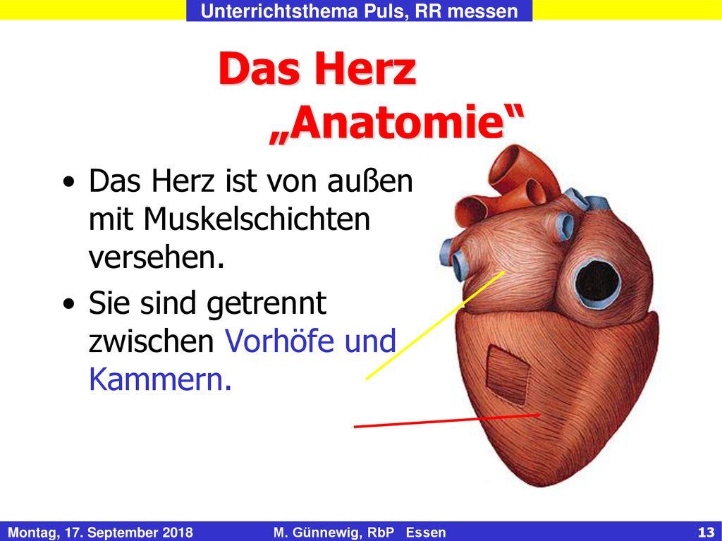 Herz-Kreislauf, Puls- und Blutdruck messen - ppt herunterladen