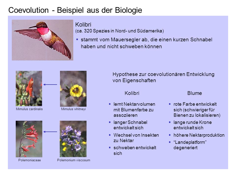 coevolution beispiel aus der biologie - Koevolution Beispiele