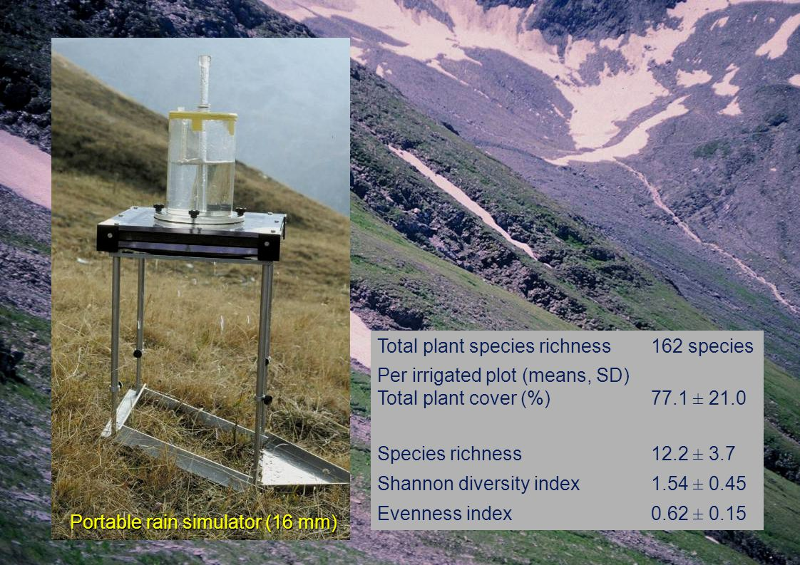 Total plant species richness