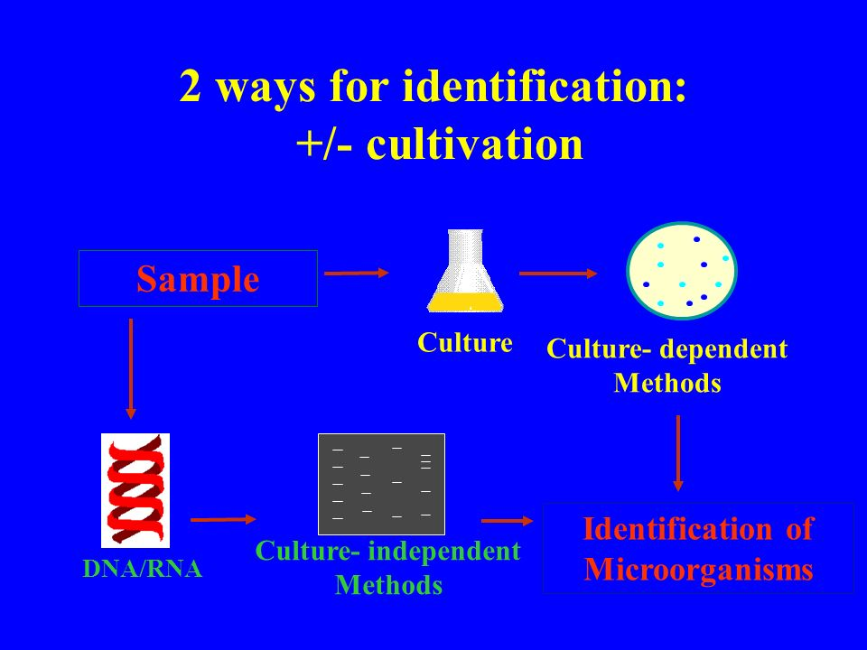 2 ways for identification: +/- cultivation