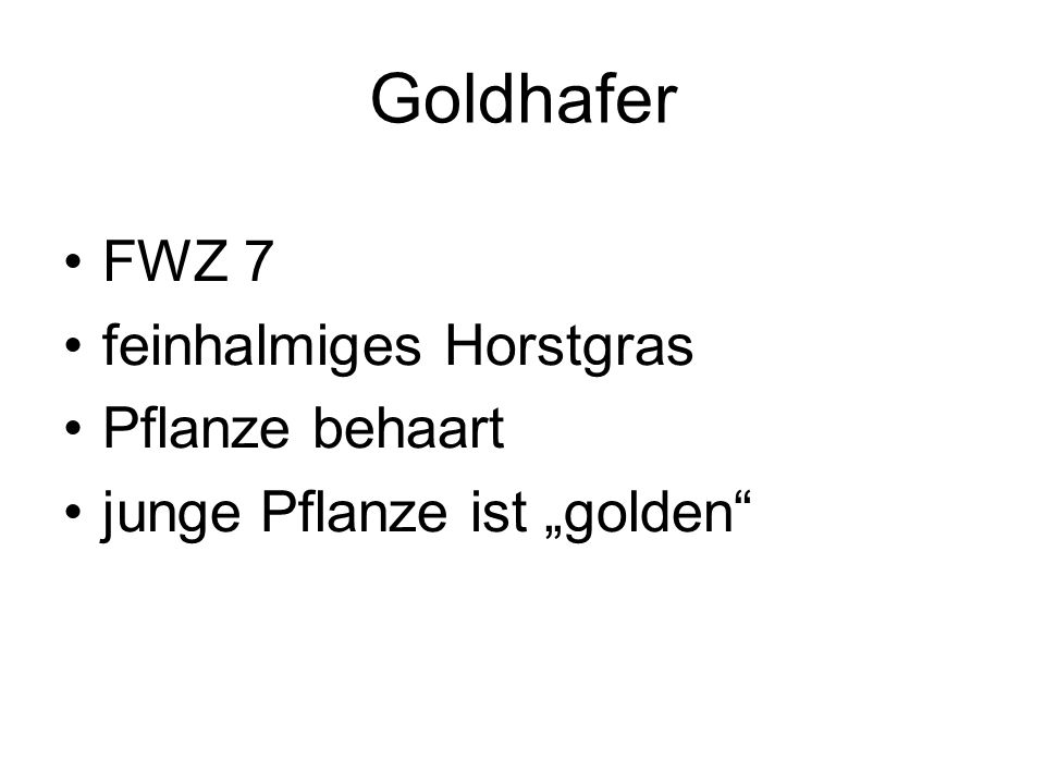 Goldhafer FWZ 7 feinhalmiges Horstgras Pflanze behaart