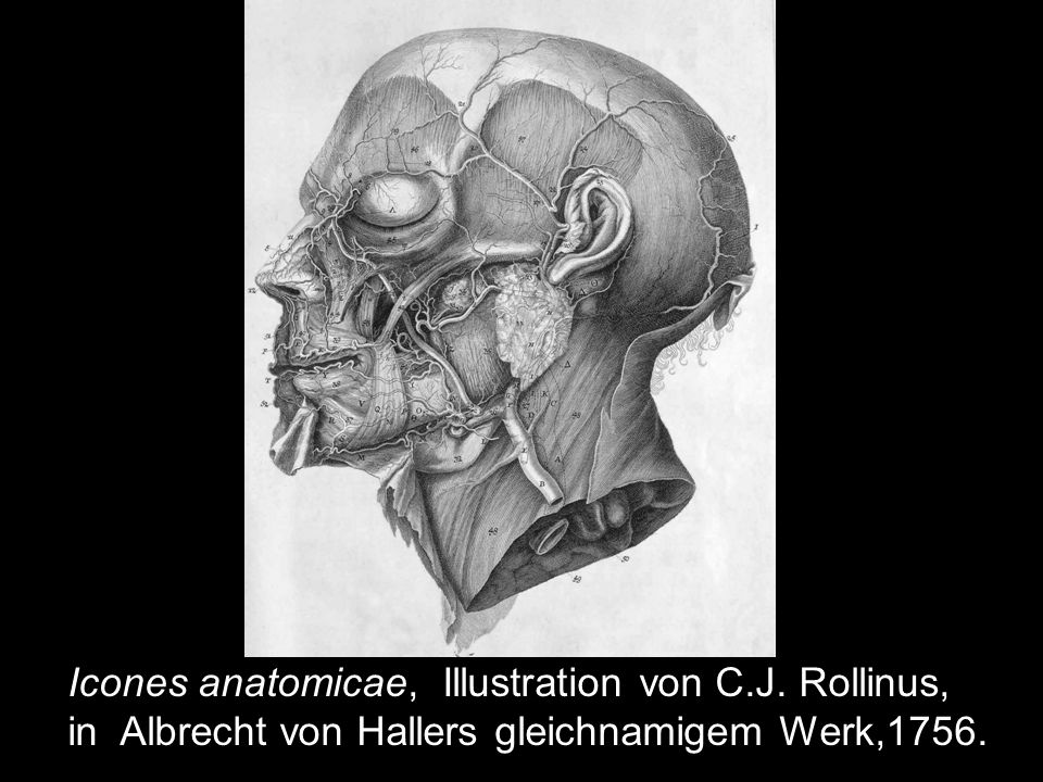 Icones anatomicae, Illustration von C.J. Rollinus,
